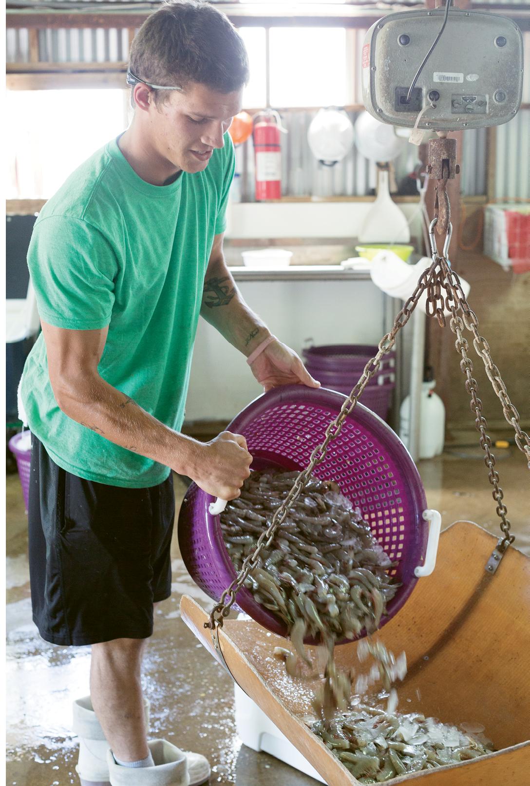 Kola Tarvin weighs headed shrimp.