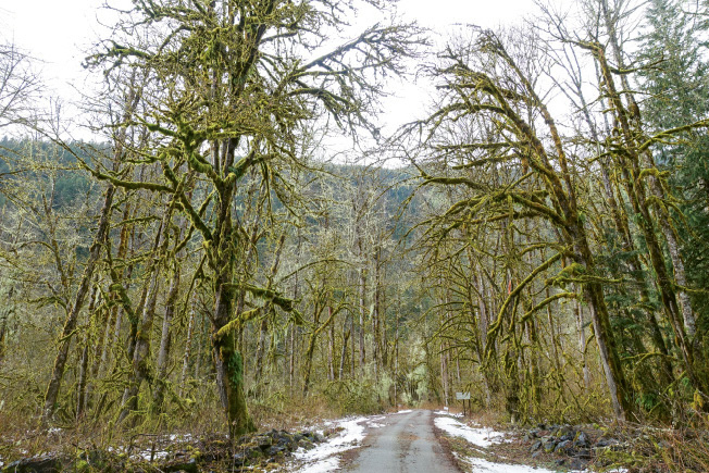 The road to Mount Baker