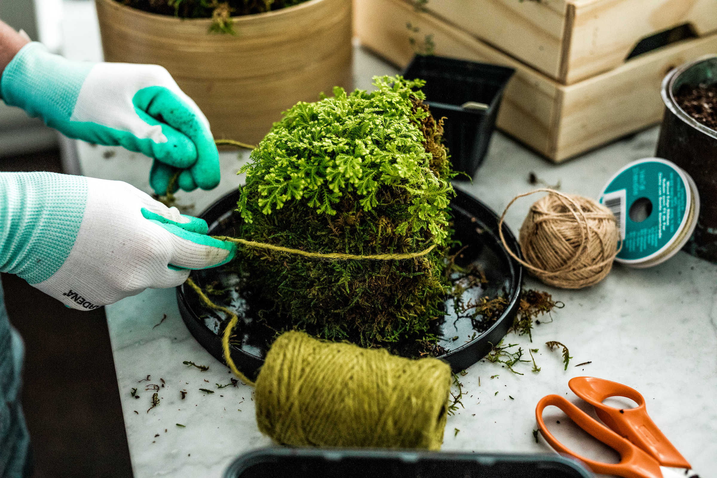 Use twine to tie the moss in place.