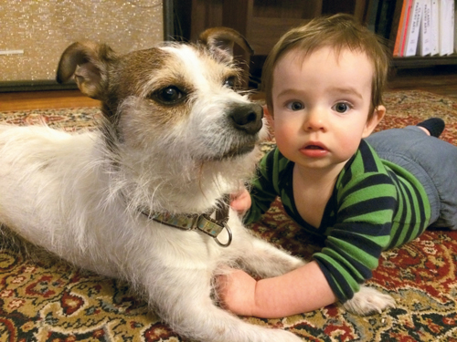 The chef's Jack Russell terrier, Sandy Beach, loves to pal around with her one-year-old son, Sibley. pethelpers.org