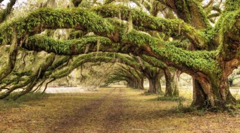 NATURAL BEAUTY: Call it the yin and the yang: As lively as our city center is, we can escape down quiet country roads and marvel at towering oaks in less time than it takes folks in other urban settings to commute to work.