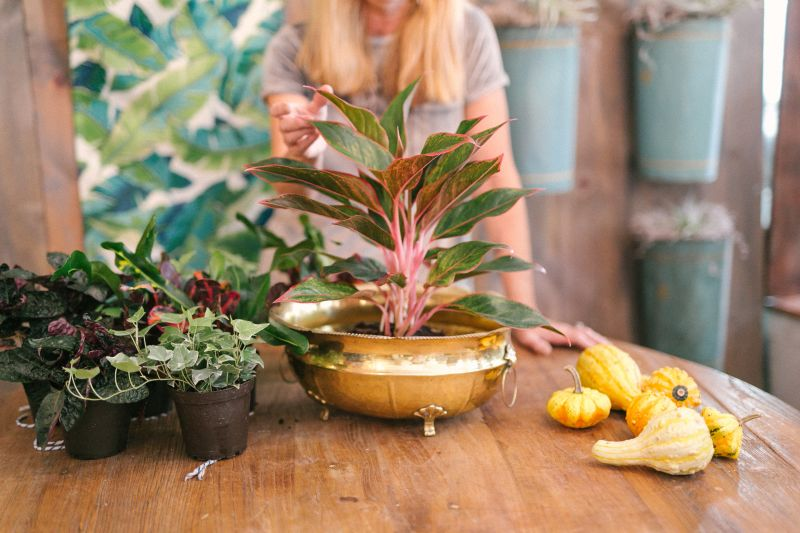 For this Thanksgiving arrangement, place the largest plant (Out of the Garden's Naomi Wallace used a 'Petra Croton' in a nine-inch pot) in the center of the container.