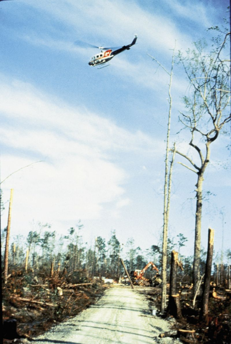 Westvaco (now MeadWestvaco) used helicopters to survey its decimated timberland. According to the National Weather Service, Hugo felled more than one billion board feet of lumber in the Francis Marion National Forest, permanently ending logging operations there.