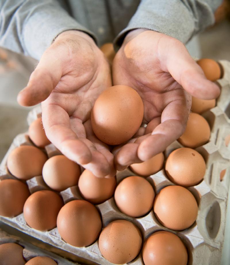 Crates transport eggs to restaurants.