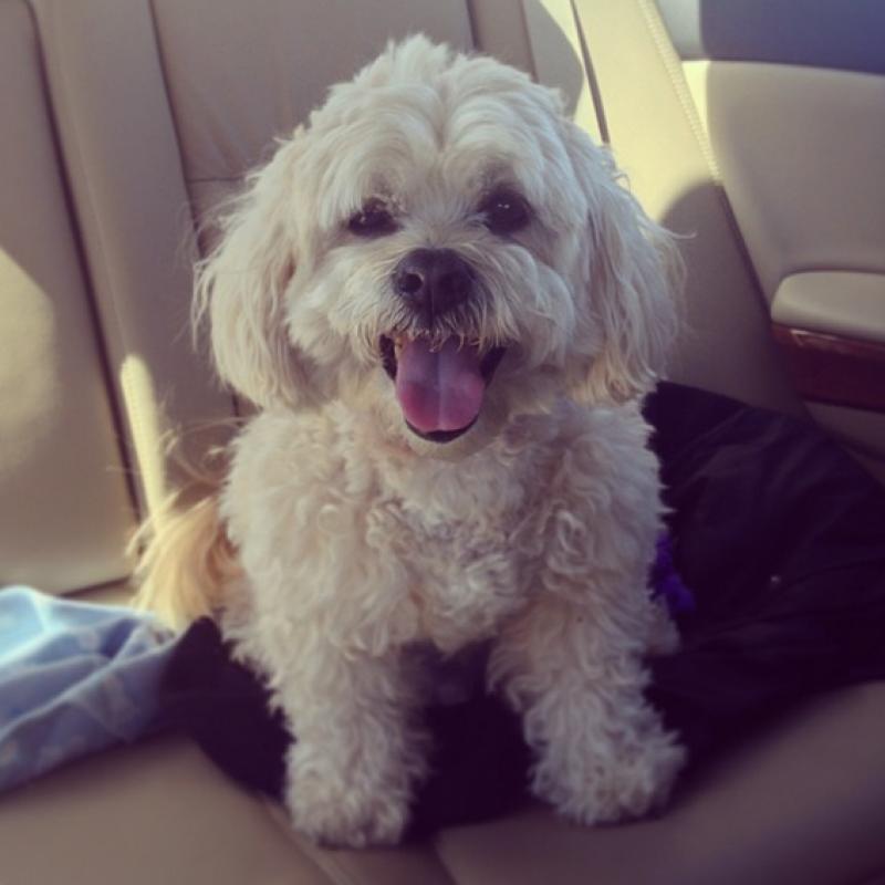 Art intern, Abby Murphy's dog Joey