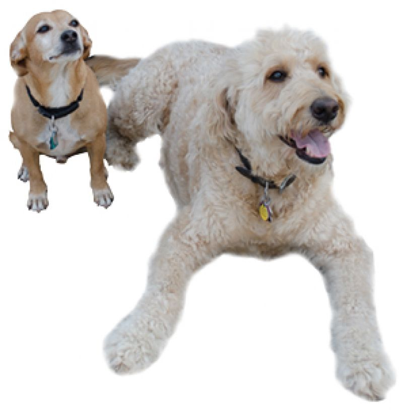 """Perfect Pooches:  """"We have two pups: Magner, our golden doodle, is named after the cider, and Barley, a mutt, got his name because we love beer."""""""