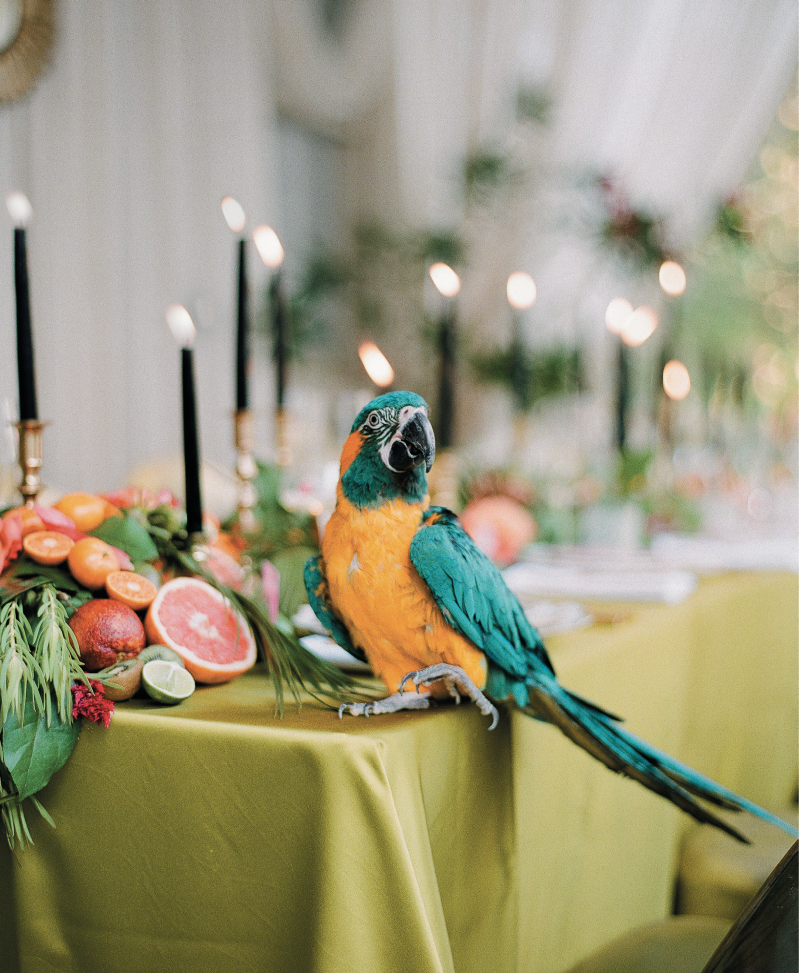 Vault member and photographer Anne Rhett arranged for two tropical birds—Buddy, the blue-throated macaw and Neena the golden conure—to be on-site through their handler Backyard Treasures, which led to many a laugh and photo op.