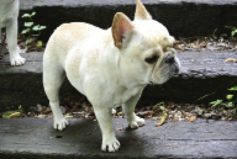 Contributing Food Editor,  Marion Sullivan's dog Estelle