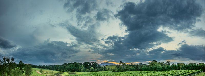 Parker-Binns Vineyards in Mill Spring