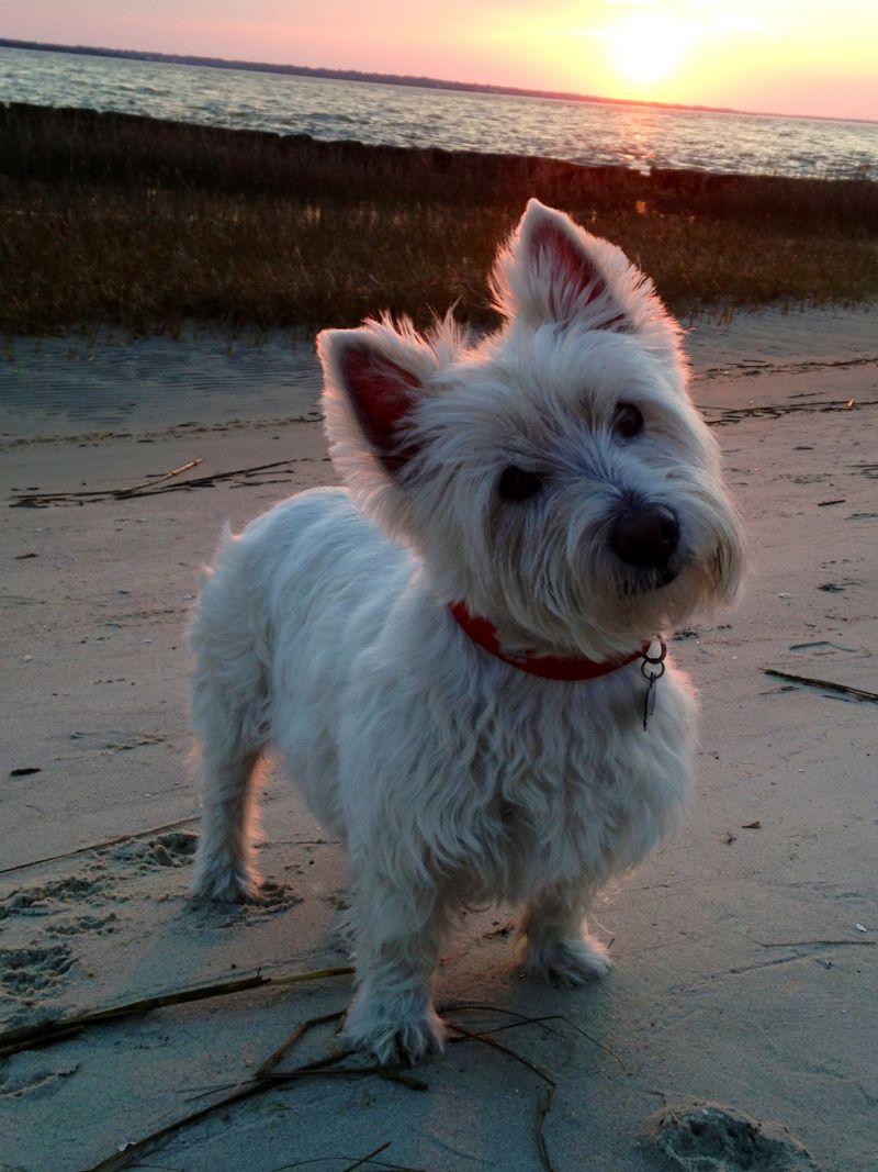 Senior Account Executive, Ellen Forbes' dog Murphy