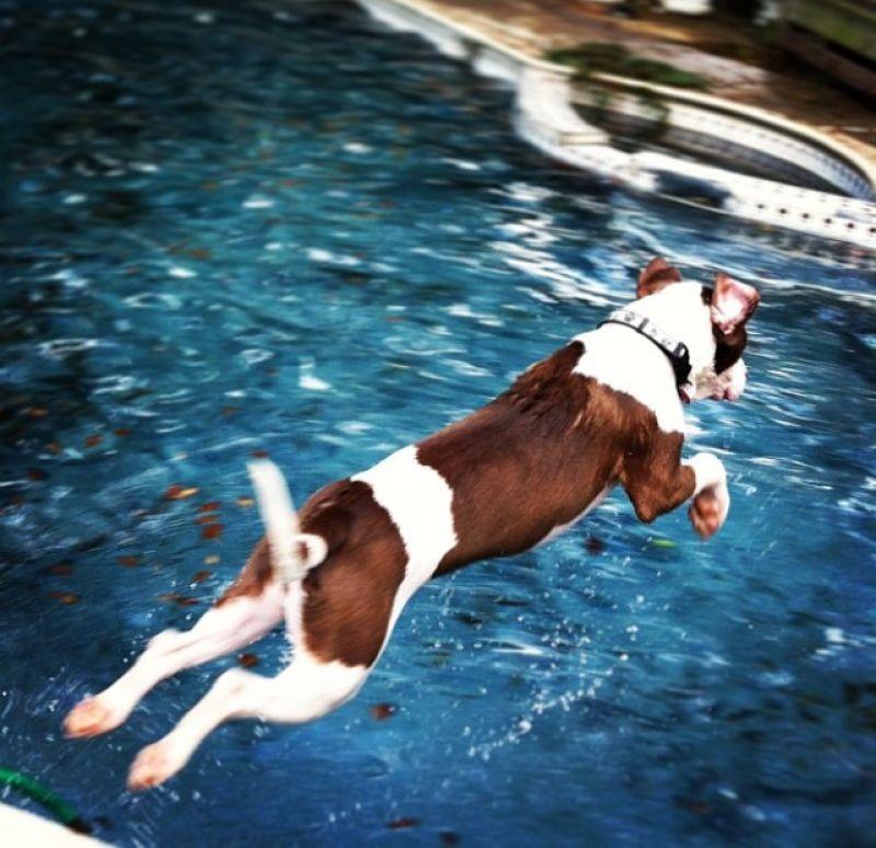 Art Director, Melinda Smith-Monk's dog Hank