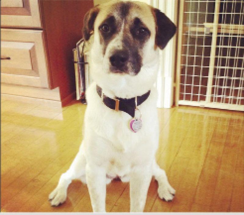 Contributing Graphic Designer, Julia Frazier's dog Callie