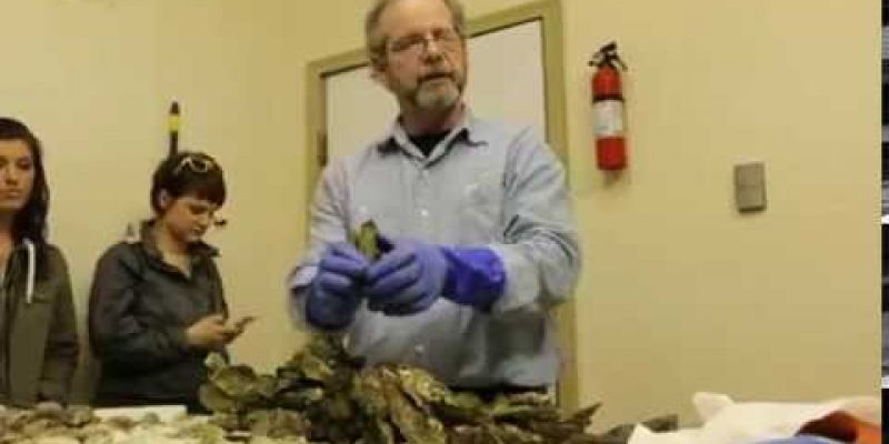 Embedded thumbnail for VIDEO: Learn how Clammer Dave grades his oysters