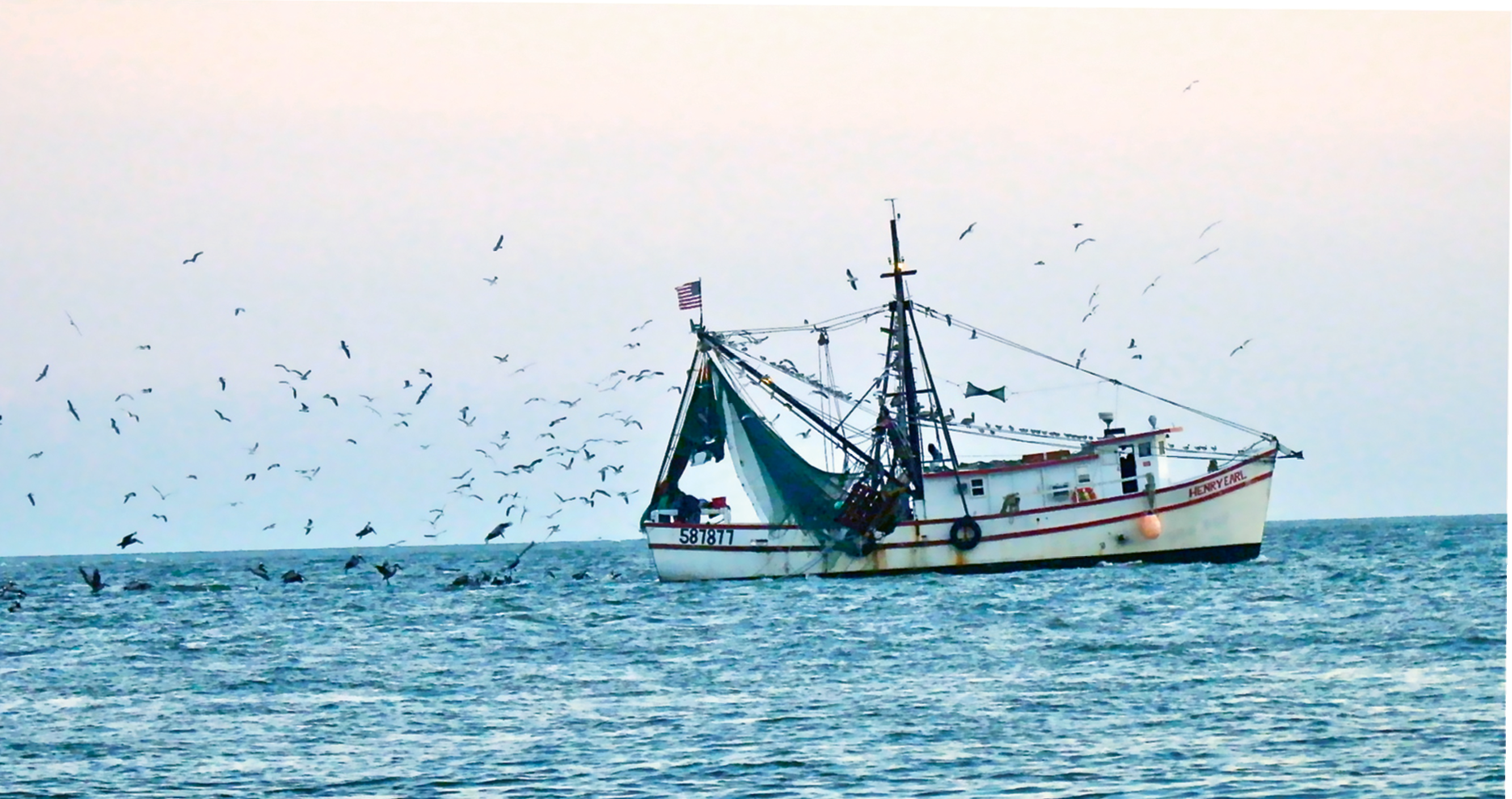 A Southern Living by Lisa Hartzog  {Amateur category} - A shrimp boat heads down the Edisto River with many feathered friends in pursuit.