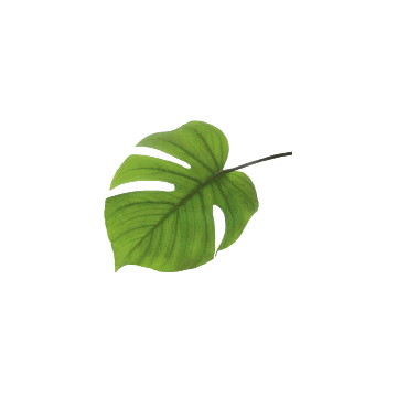 Keep the look fresh with vibrant foliage clippings from  your yard.