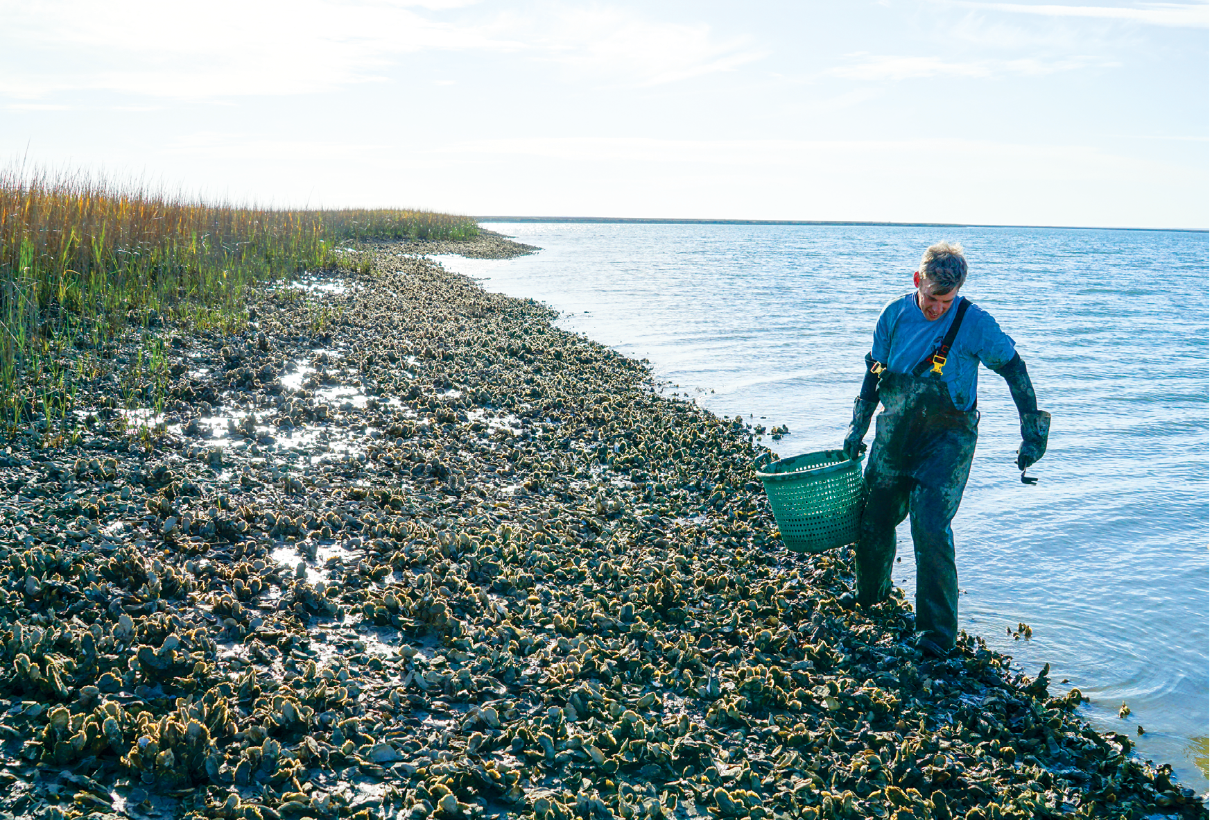 In the Cape Romain National Wildlife Refuge, Jeff Spahr of Charleston Oyster Company cultivates his oyster beds within 950 acres of leased marshland just off Bulls Bay. Through careful selection, his beds are thriving (top right and bottom right). Each day the clusters reappear and disappear with falling and rising tides.<br />