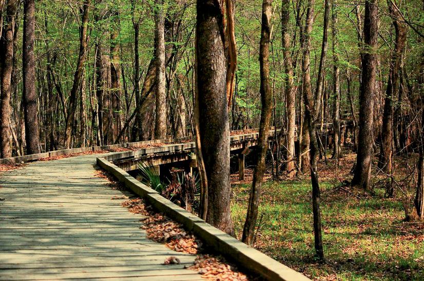 2. The Palmetto Trail