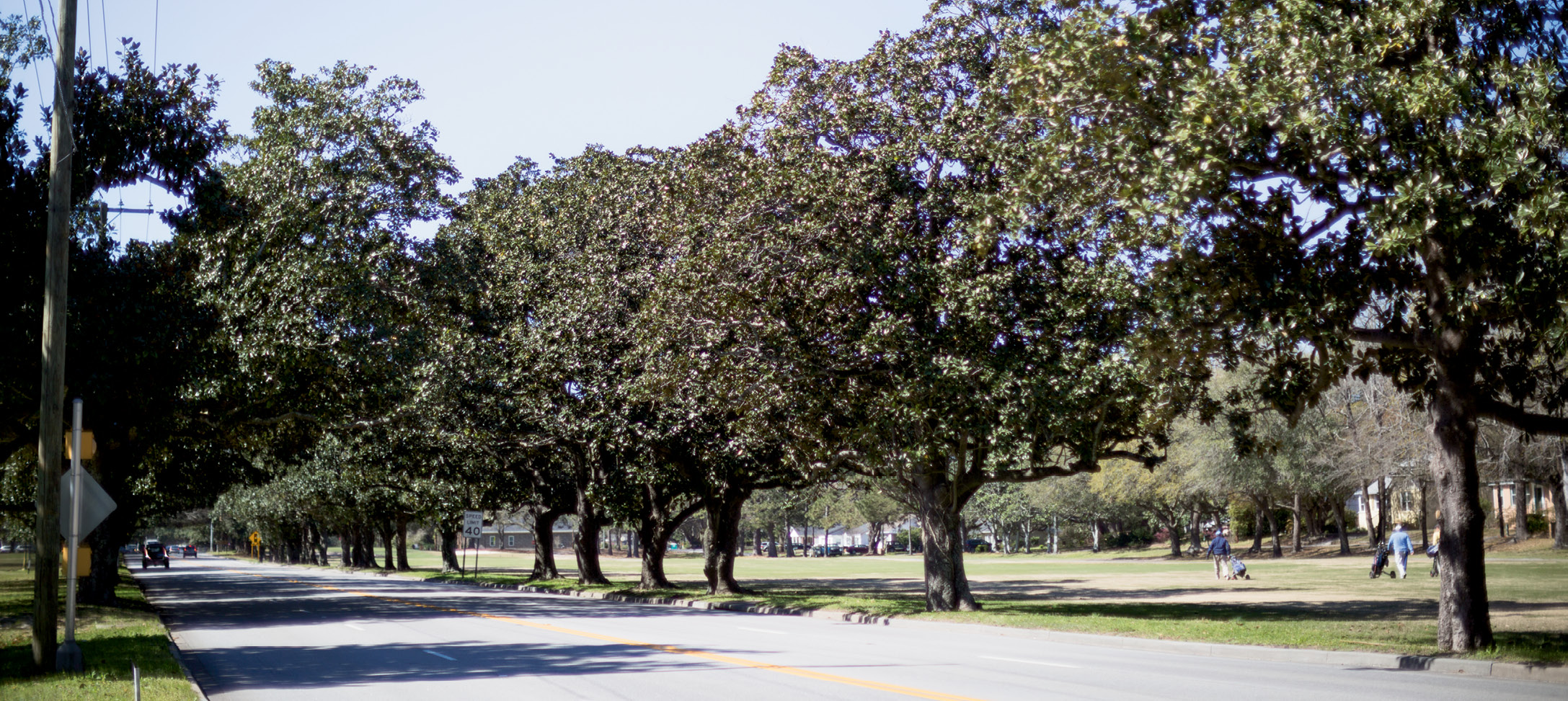 """In 1935, Victor had 200 magnolias planted along Maybank Highway """"to assure an avenue of loveliness for all who pass that way."""""""