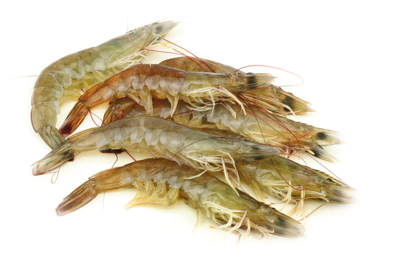 "Local Catch ""Small creek shrimp, the kind you can't get commercially—the kind that my grandfather used to catch—are the best."""