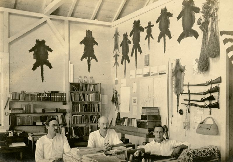 The skins of tropical wildlife specimens hang in the lab above Inness Hartley, William Beebe, and Paul Howes.